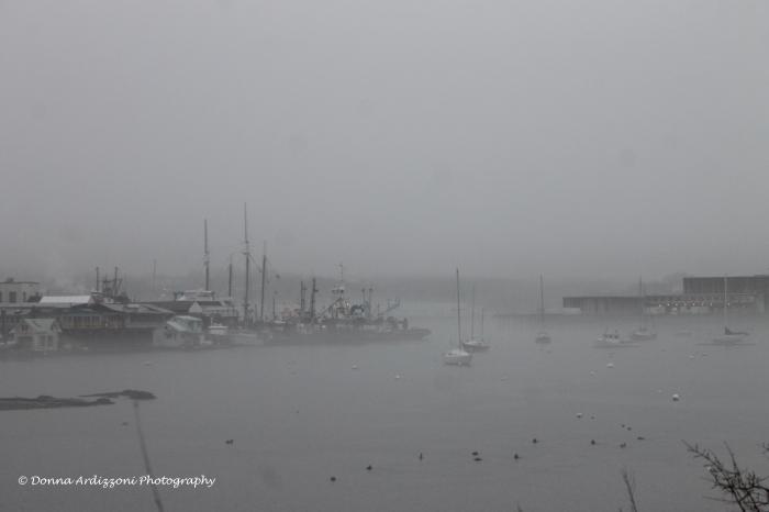 Janaury 14, 2014 fog at Rocky Neck