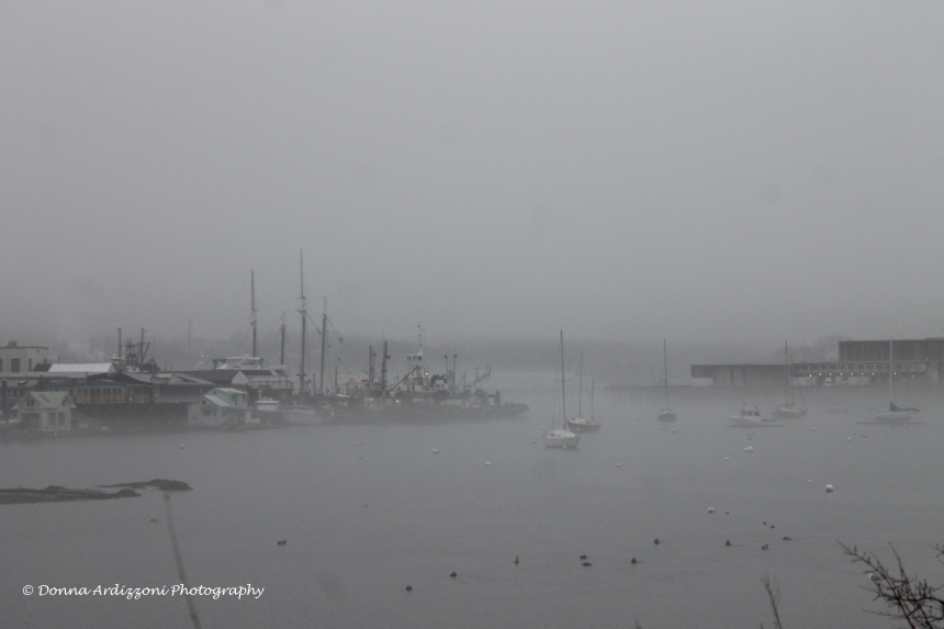 Janaury 14, 2014 fog at Rocky Neck