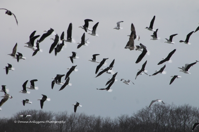 January 19, 2014 Birds in flight