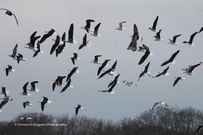 January 19, 2014 Birds in flight