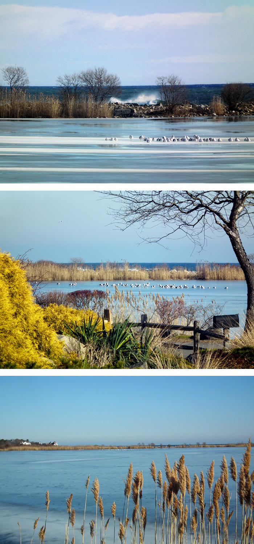 niles pond_more pretty winter