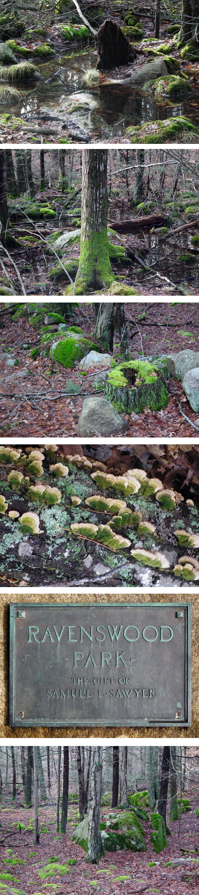 woodland winter greens