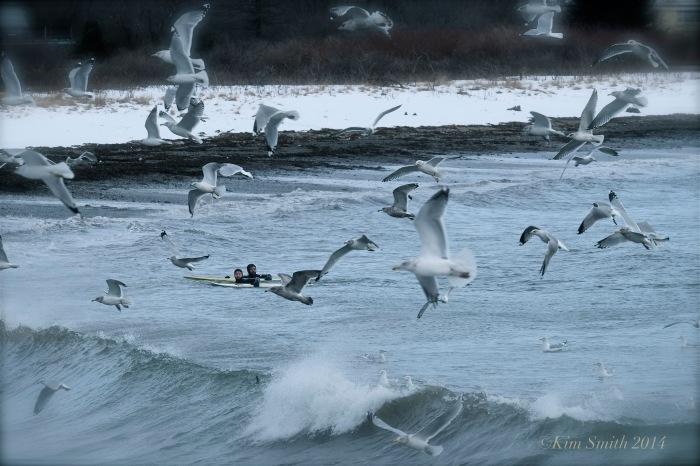 Brace Cove surfers ©Kim Smith 2014
