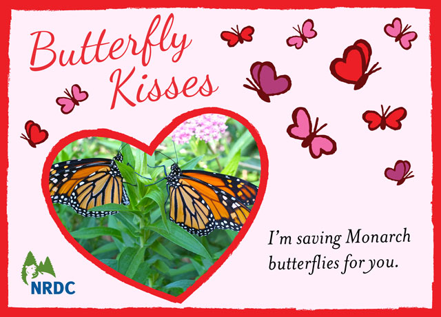 butterflykisses2014
