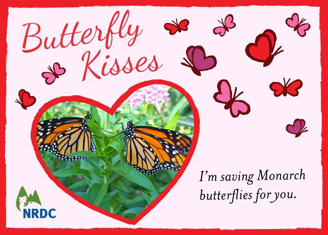 butterflykisses2014