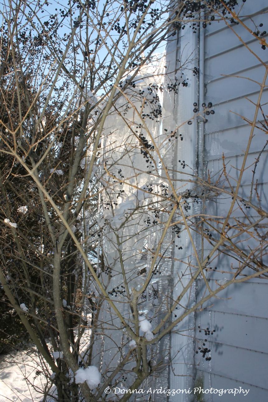 February 10, 2014 winter berries