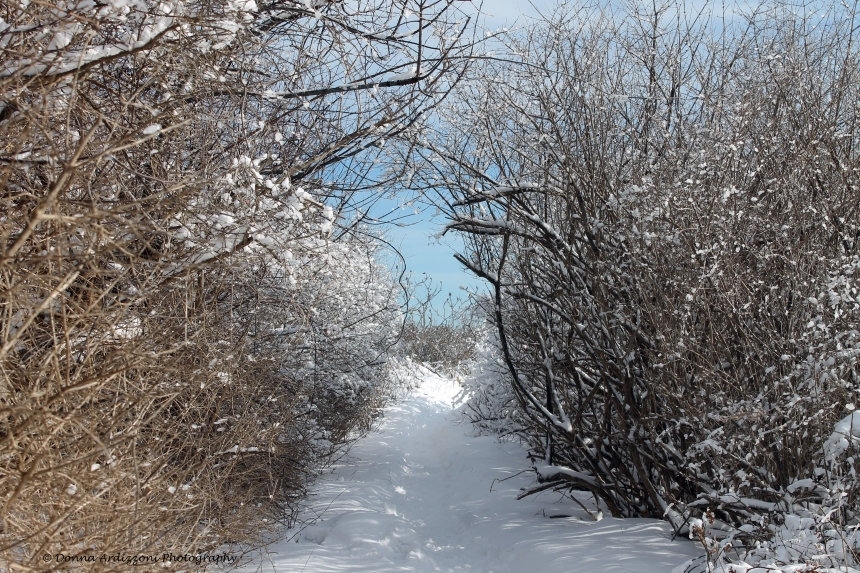February 16, 2014 entering Brace Cove