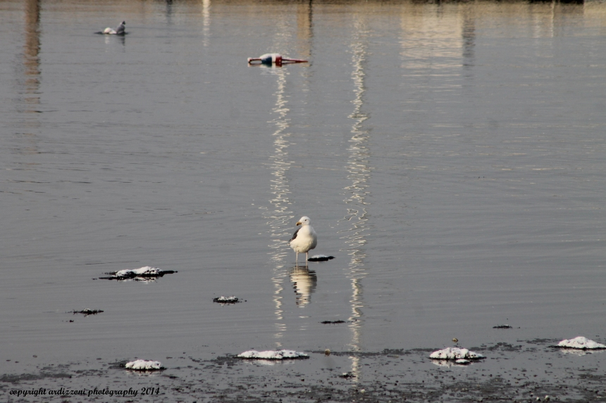 February 27, 2014 lonely gull