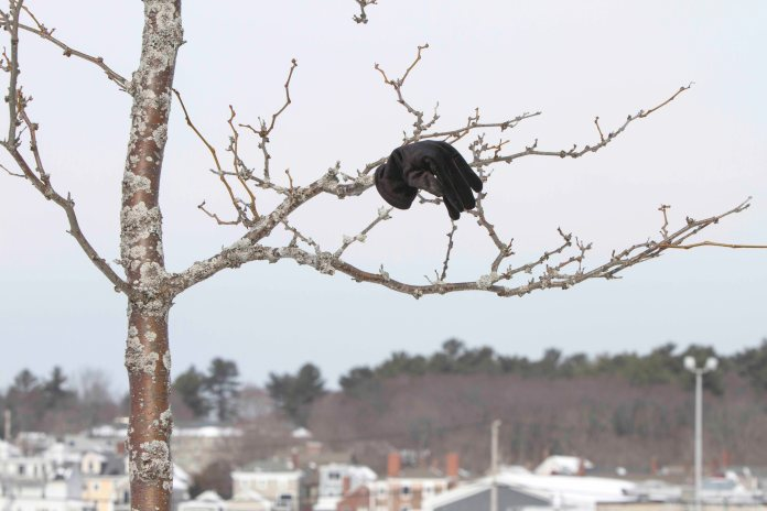 Treed Glove... Gloved Tree?