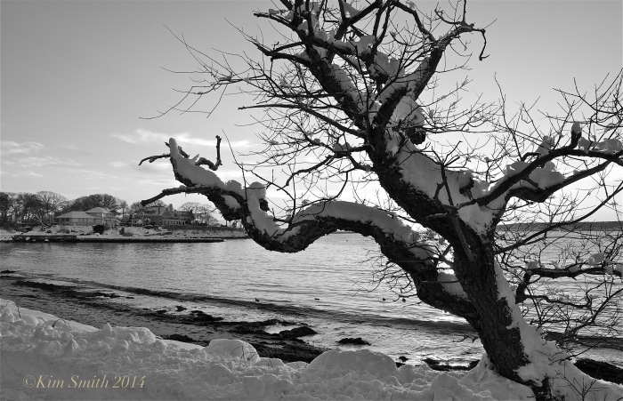 Raymond's Beach Cherry Tree ©Kim Smith 2014