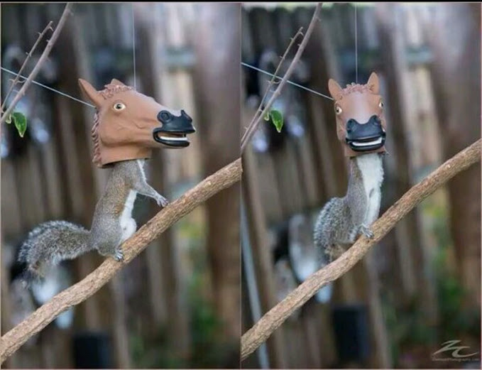 sillysquirrels