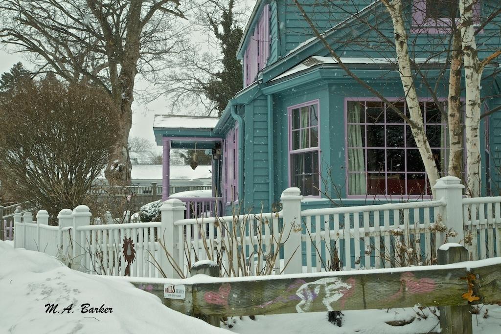 brighten a snowy day 1190