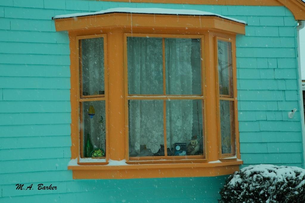brighten a snowy day 1192