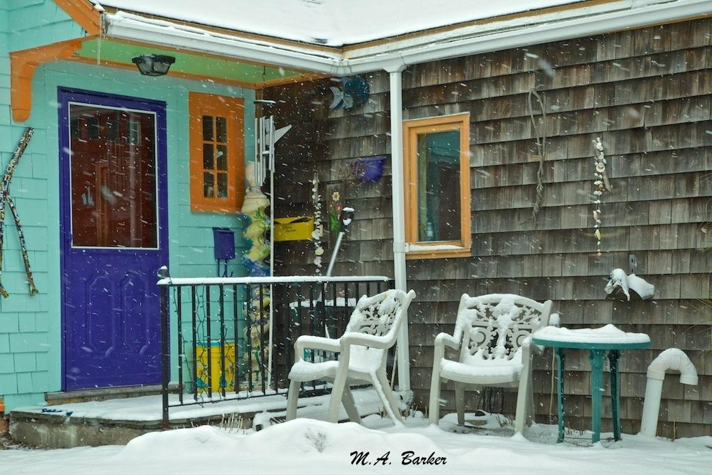 brighten a snowy day 1193