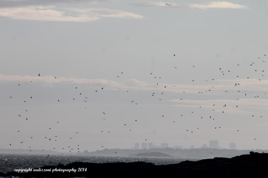 March 19, 2014 Birds over Kettle Cove Island