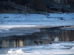 mills ducks