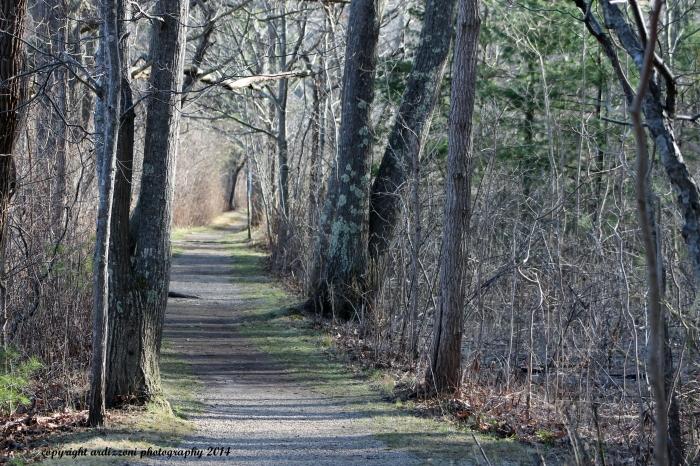 April 16, 2014 trail to Ocean Lawn