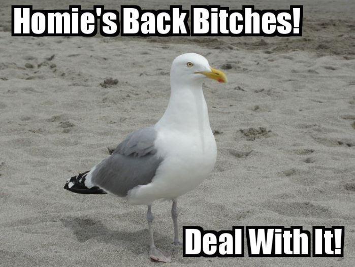 HomiesBack