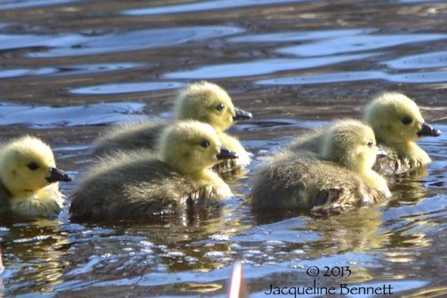 springbabies2