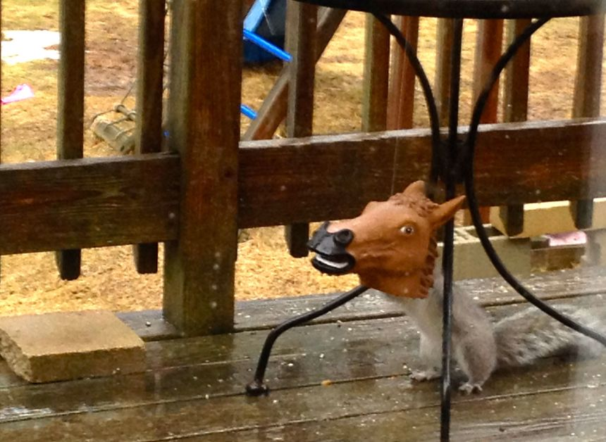hungry squirrel acting like a horse's patoity