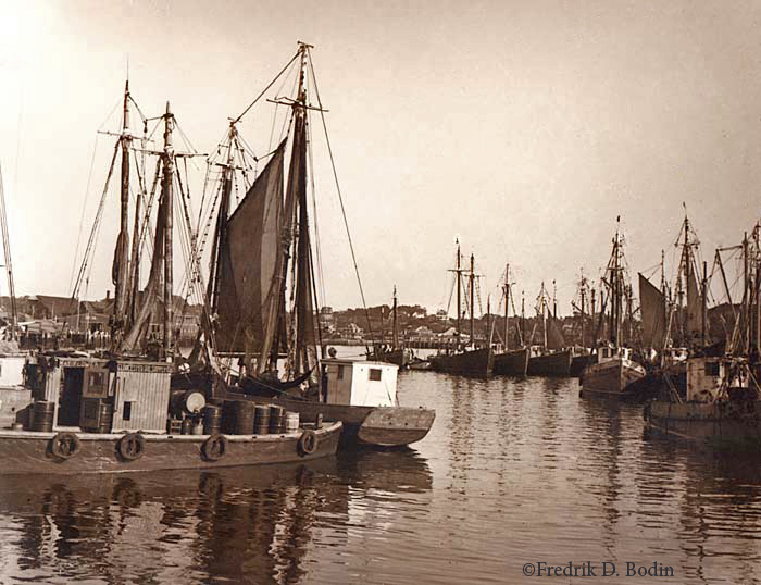 The fishing fleet is tied up in Harbor Cove about 1930, between Downtown and The Fort. The Gloucester Oil Supply Company is nearby, and a notation on the negative envelope refers to the Schooner Mayflower in the photo. Can you find it?