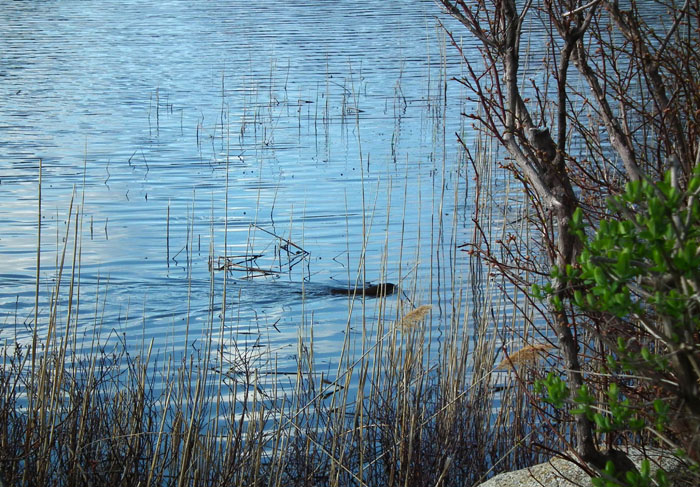 niles pond loch ness monster