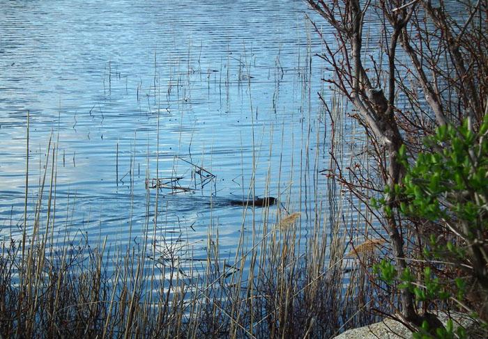 niles pond loch ness monster