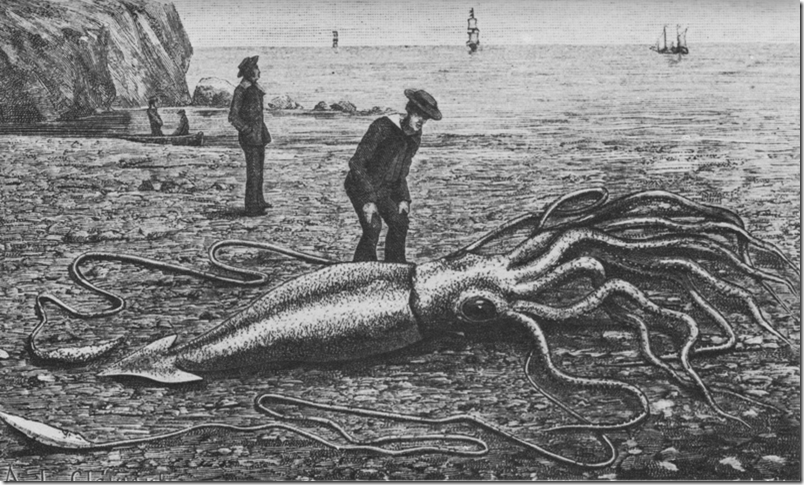 800px-Giant_squid_catalina2
