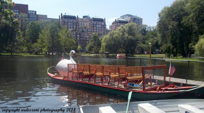 June 24, 2104 Boston's Swan Boats