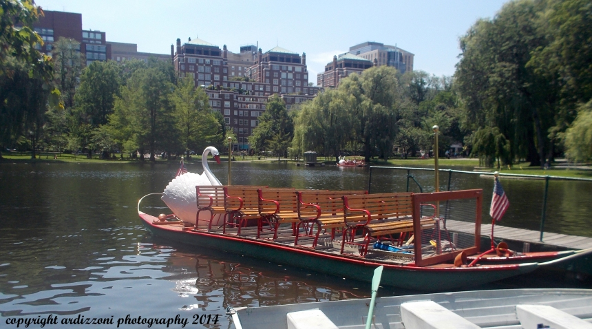 June 24, 2104 Boston's Swan Boats
