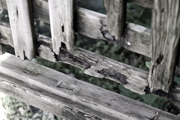 Rotting untreated trellis ©Kim Smith 2014