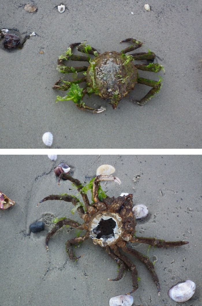 strange crab