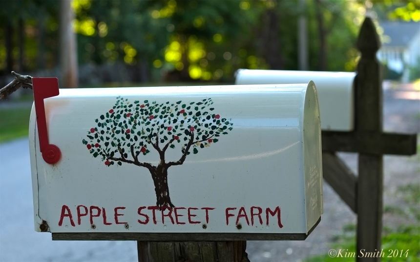 Apple Street Farm ©Kim Smith 2014