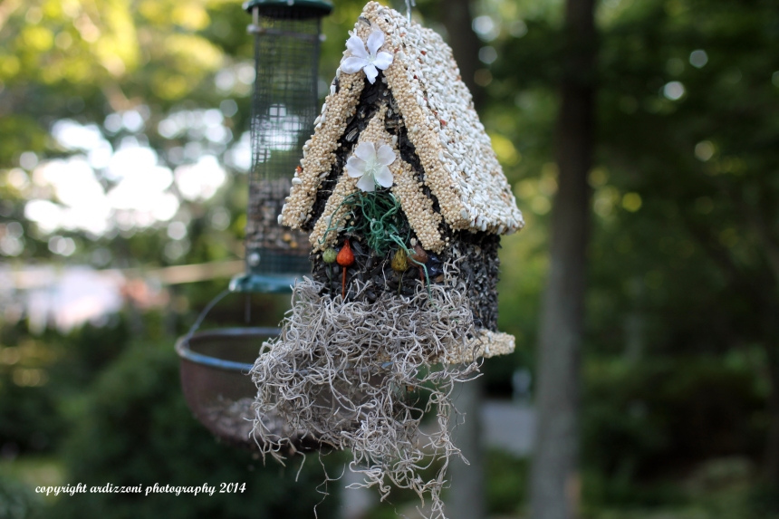 August 23, 2014 edible bird feeder
