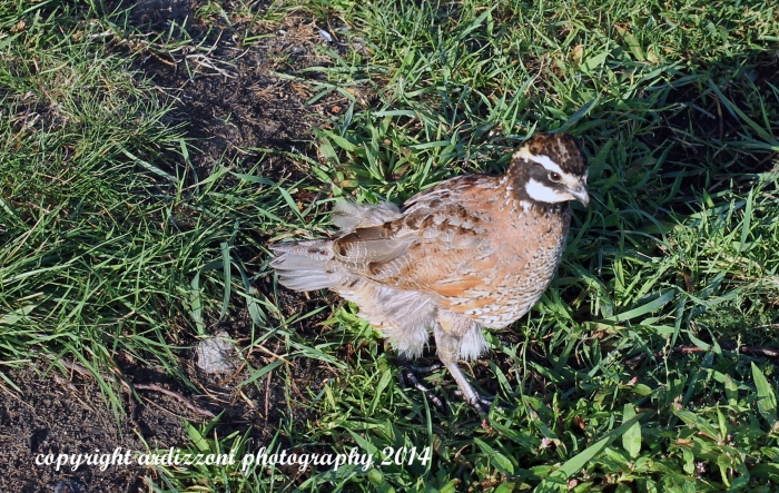 August 23, 2014 What kind of bird