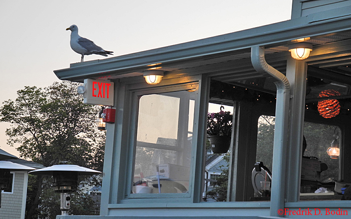 Sunday on the deck at the Studio Restaurant on Rocky Neck: We met our friends Sheila and Malva for a meal and drinks. Homie, one huge seagull, checked out the fare on the customers' plates. He left a big tip on the way out!
