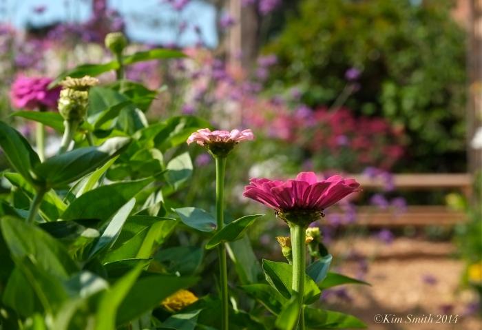 Pathways for Children butterfly garden -7 ©Kim Smith 2014