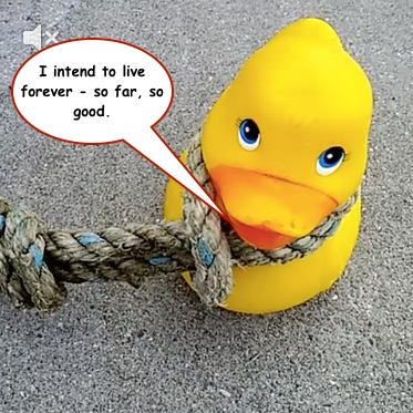 Instead of the Stockholm Syndrome it looks like Rubber Duck is beginning to suffer from Steven Wright Syndrome.