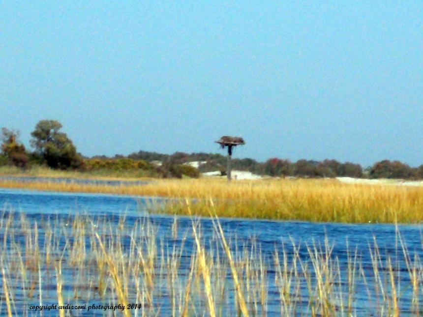 September 28, 2014 Osprey nest on the Essex River