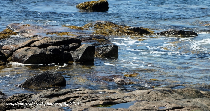 September 7, 2014 Hanging out in the blue water