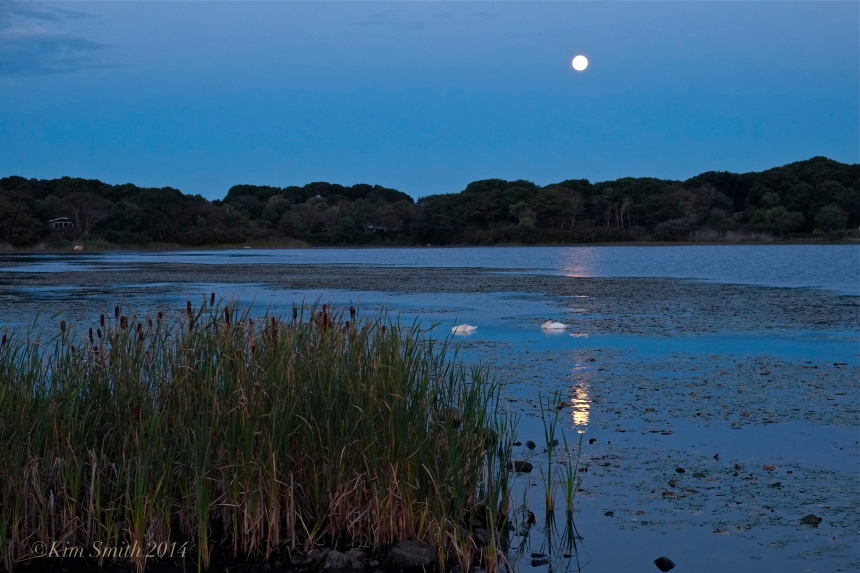 Sleeping Swans in the Harvest Moon Light -3 ©Kim Smith 2014
