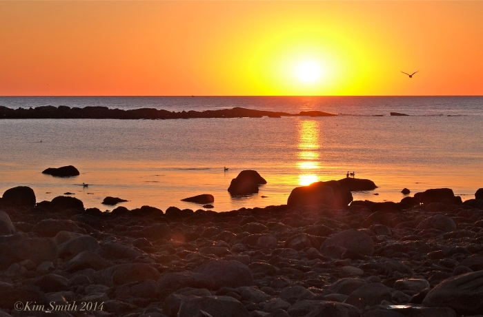 Brace Cove at sunrise ©Kim Smith 2014