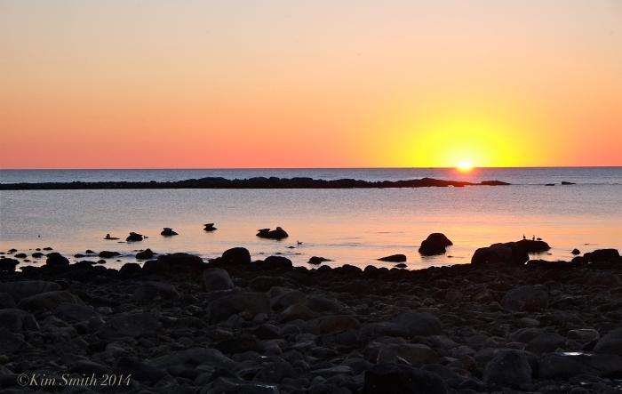 Brace Cove seals at sunrise ©Kim Smith 2014