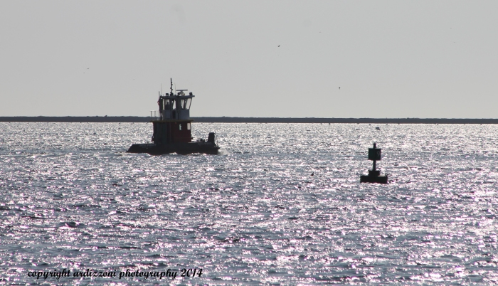 October 28, 2014 things in the harbor