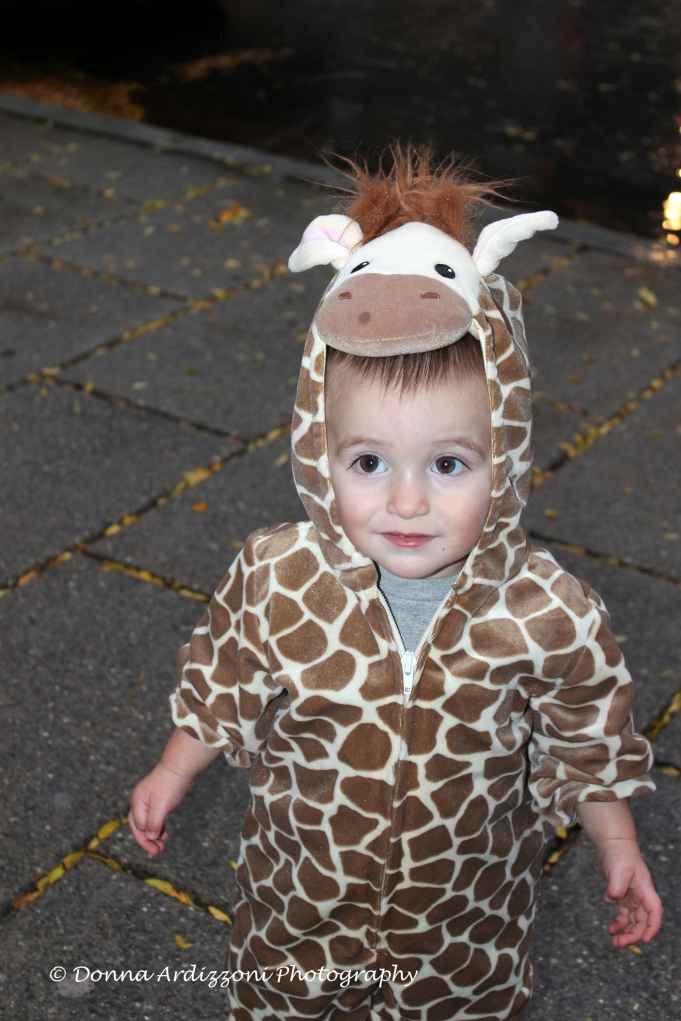 October 31, 2013 The littlest giraffee