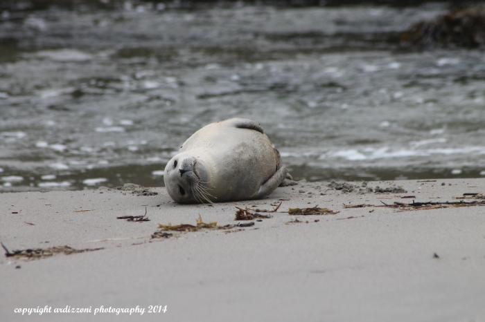 October 4, 2014 injured seal