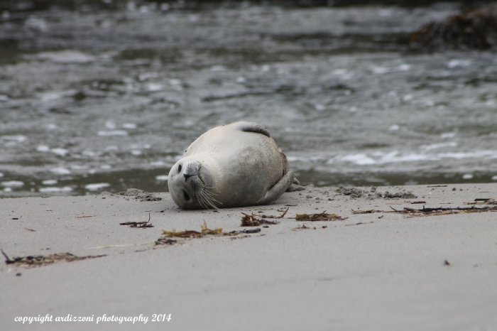 October 4, 2014 injured seal