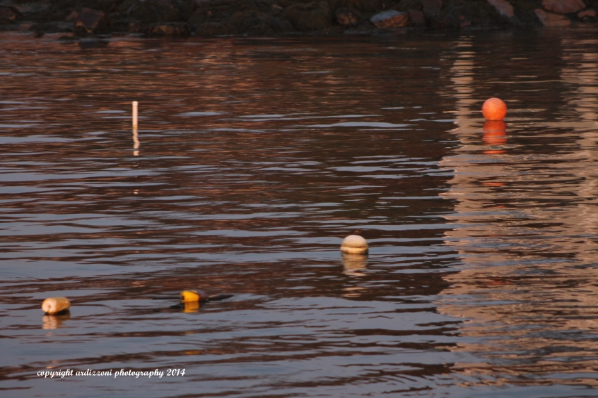 November 10, 2014 lonely buoys and moorings
