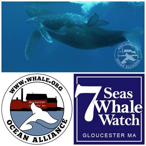 7 SeasOAwhale