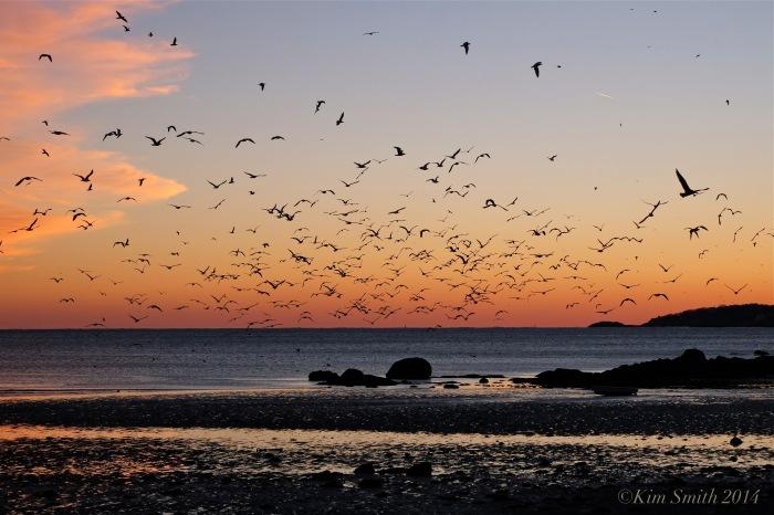 Seagulls sunset ©Kim Smith 2014
